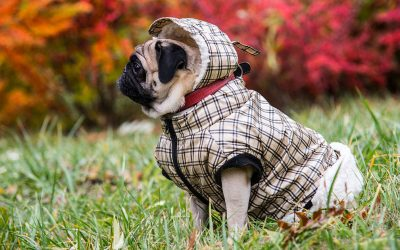 Tips for Fall Weather