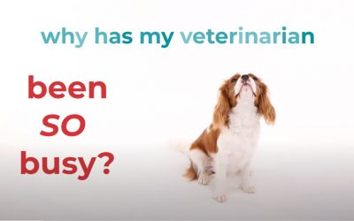 Why Has My Vet Been So Busy?
